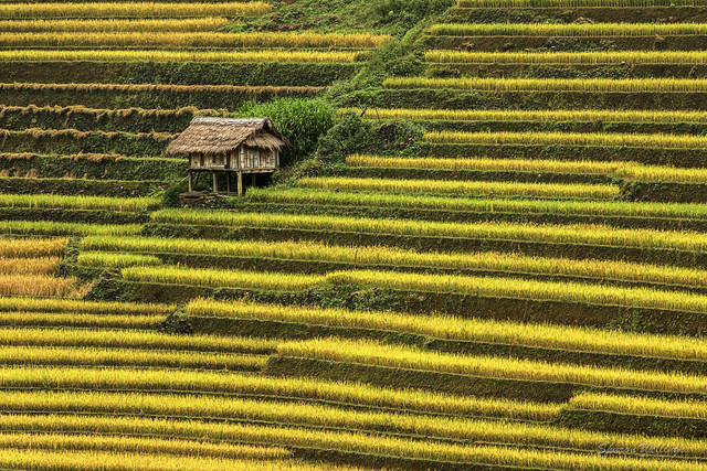 Green and Gold Fields