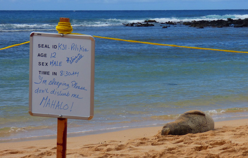 Monk Seal Pilikia