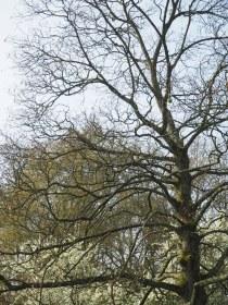 Noorder Park - Amsterdam (1)