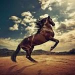 Wallpaper Hd Horse