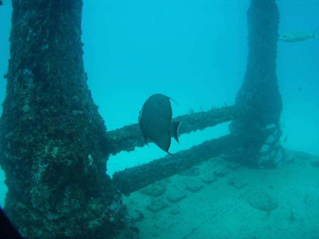 Dive-85