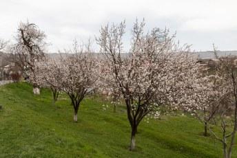 Het weer was die dag iets minder, maar aan de bomen te zien was het duidelijk lente.