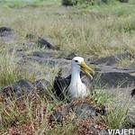 Viajefilos en La Espanola, Galapagos 049