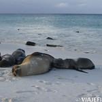 Viajefilos en La Espanola, Galapagos 109