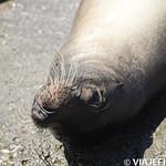 Viajefilos en La Espanola, Galapagos 074