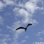 Viajefilos en La Espanola, Galapagos 055