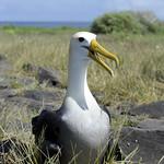 Viajefilos en La Espanola, Galapagos 051