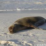 Viajefilos en La Espanola, Galapagos 103
