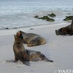 Viajefilos en La Espanola, Galapagos 112