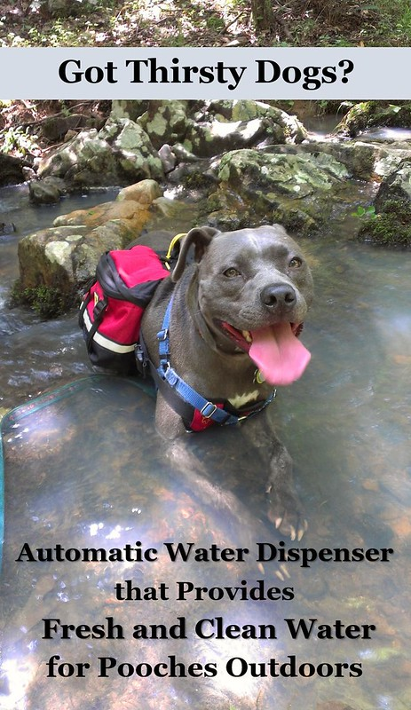 Outdoor water for dogs