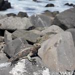 Viajefilos en La Espanola, Galapagos 058