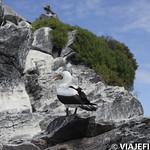 Viajefilos en La Espanola, Galapagos 064