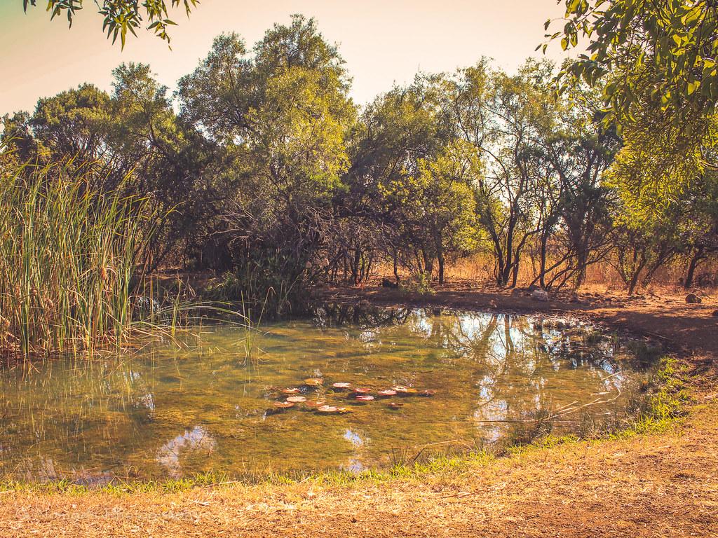Pond placid