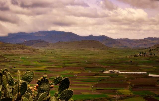 Yemeni Agriculture