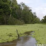 Viajefilos en la Amazonia, Peru 095