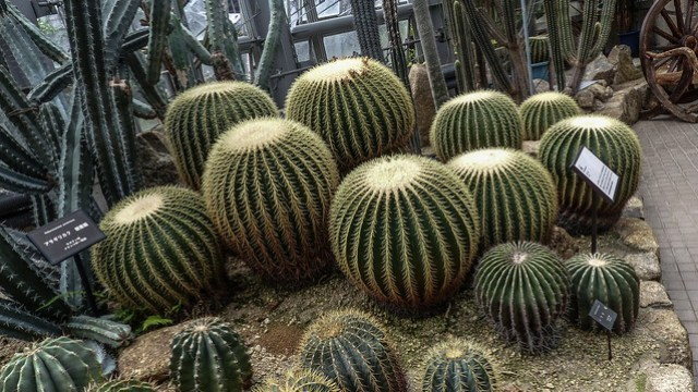 2748 Kyoto Botanical Garden