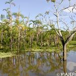 Viajefilos en la Amazonia, Peru 155