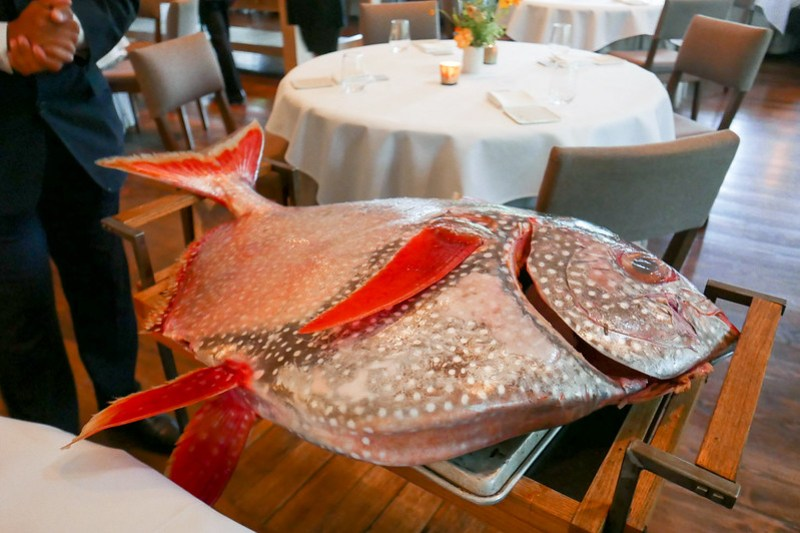 Moonfish (Opah)