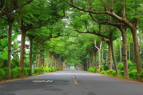 屏東潮州 泗水綠色隧道 | 家德 林 | Flickr