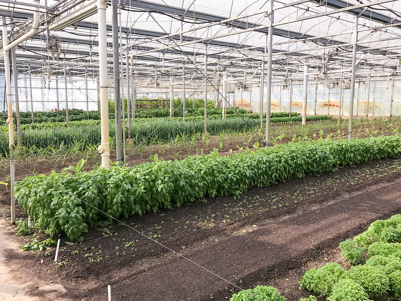 Greenhouse at Stone Barns Center for Food and Agriculture