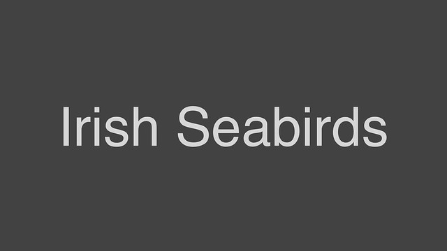 Irish Seabirds