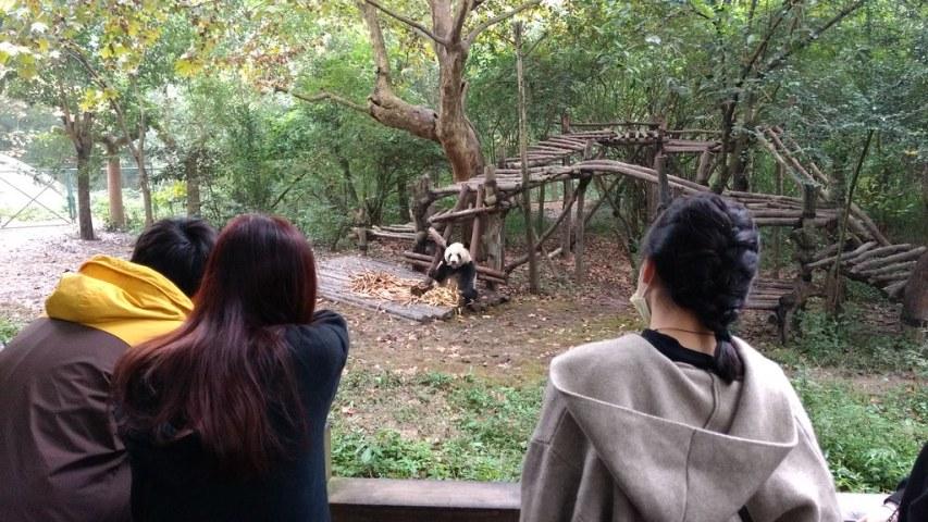 Panda Research Base