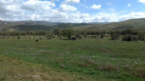 Sangke (small) grasslands