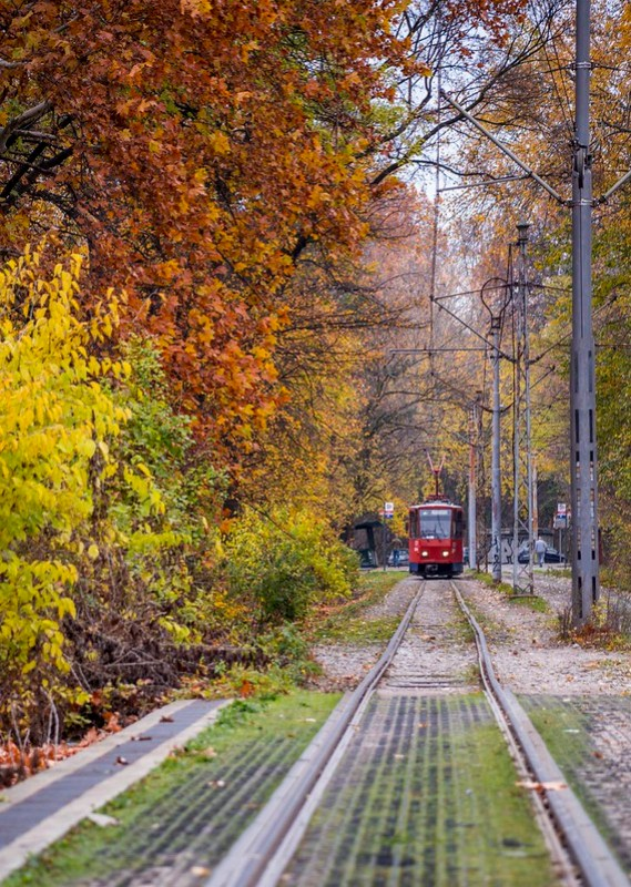 Red Tram and Colorful Leaves