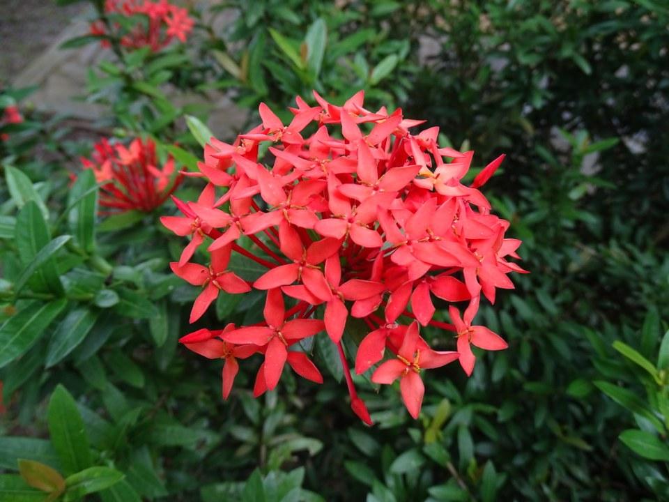 Quirigua Entrada Entorno Natural Guatemala 09