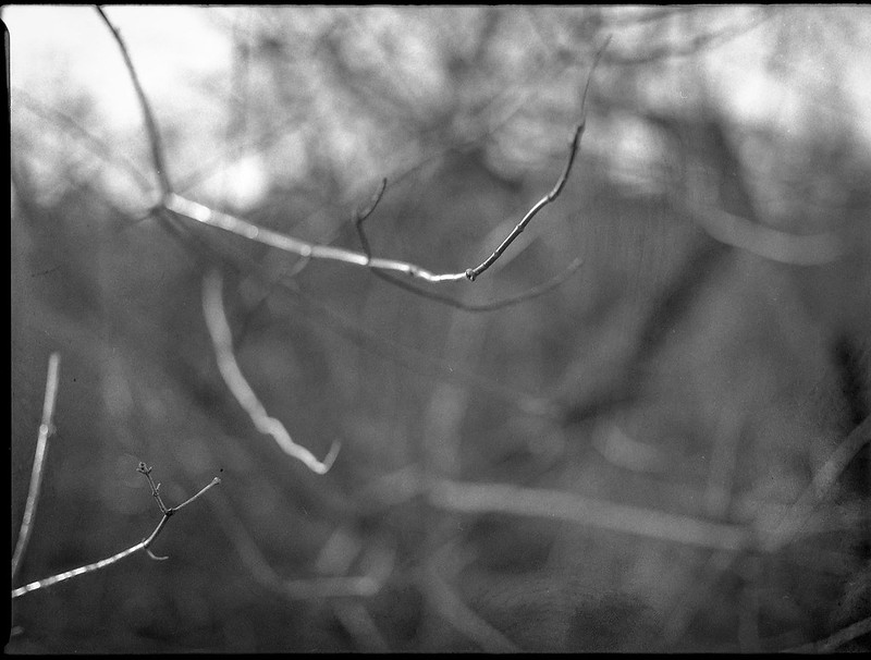 beautifully lit branches, Carrier Park, French Broad River, Asheville, North Carolina, Mamiya 645 Pro, mamiya sekor 80mm f-2.8, 12.30.17