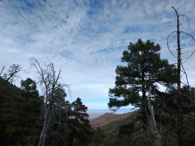 Madera Canyon, Corondao Forest