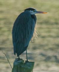 Skagit Morning Birds-21