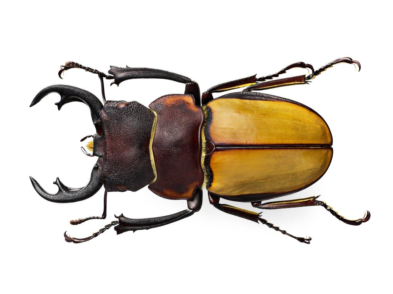 H6D-400c_MS_comparison_Beetle_1