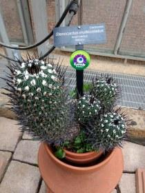 Brain cactus!