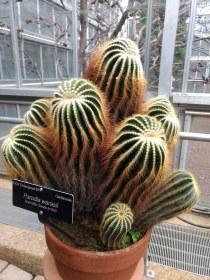US Botanical Gardens