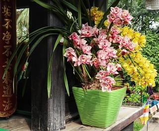 Orchid envy
