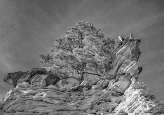 Perched near Checkerboard Mesa