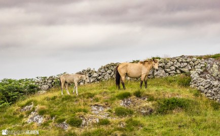Ireland - 0857