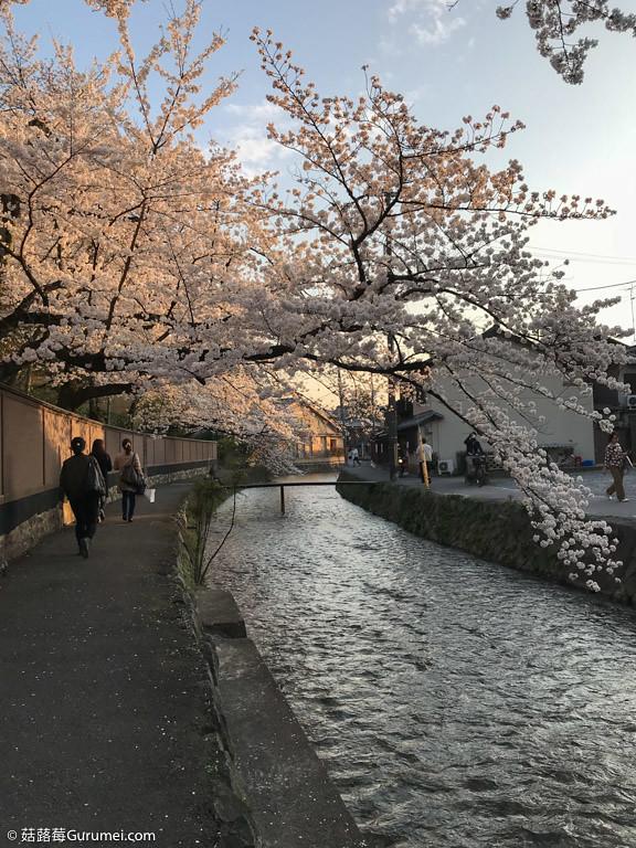 打工度假-京都生活-賞花、野餐-089