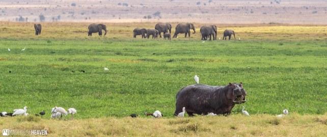Kenya - 0486