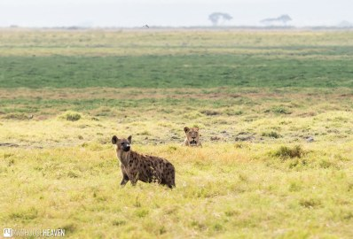 Kenya - 0399