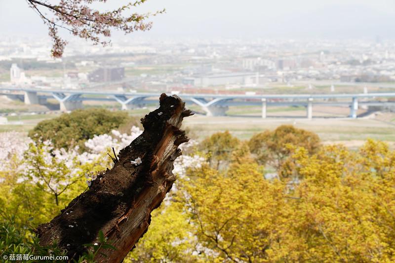 打工度假-賞櫻巡禮-398