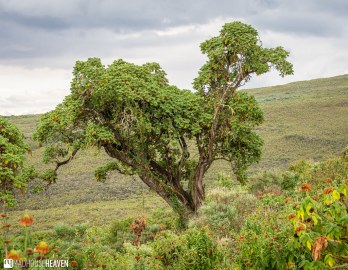 Kenya - 0857