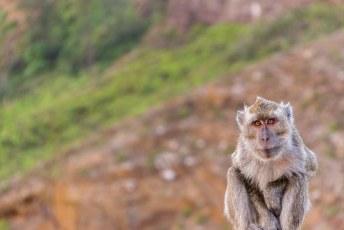 waar we samen met de aapjes van genieten
