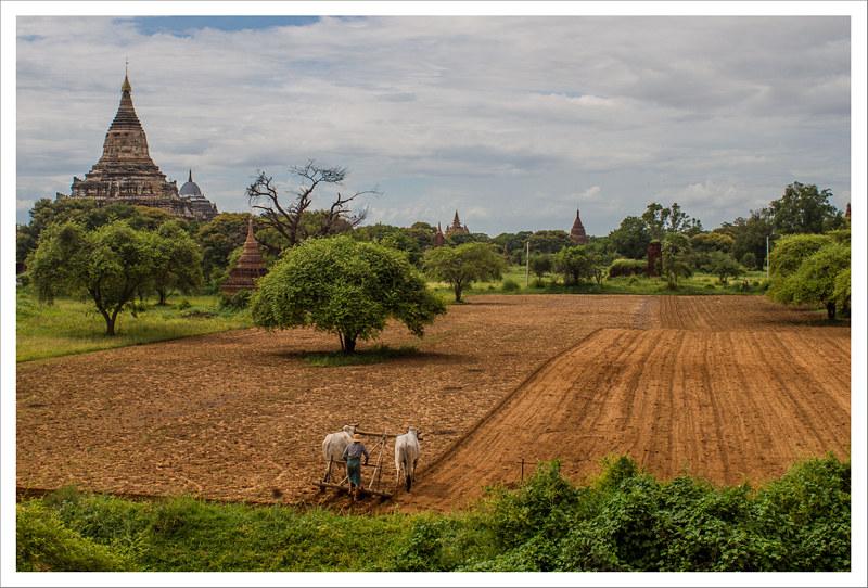 Bagan-124