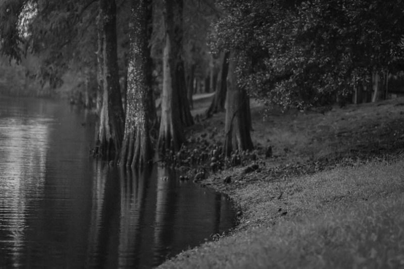 Florida cypress trees II, water, reflections, near dusk, Jacksonville, Florida, Nikon D3300, mamiya sekor 80mm f-2.8, 11.17.18