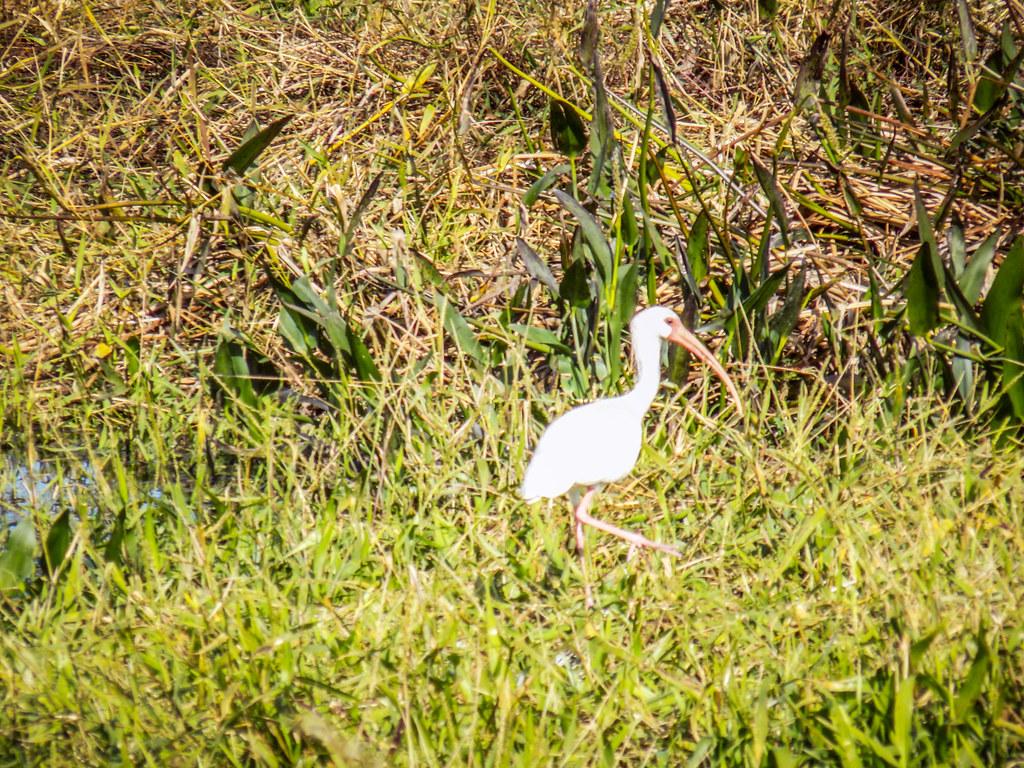 Stick Marsh Birding-006