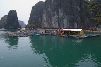 Besuch Pangasius Fischzucht 1