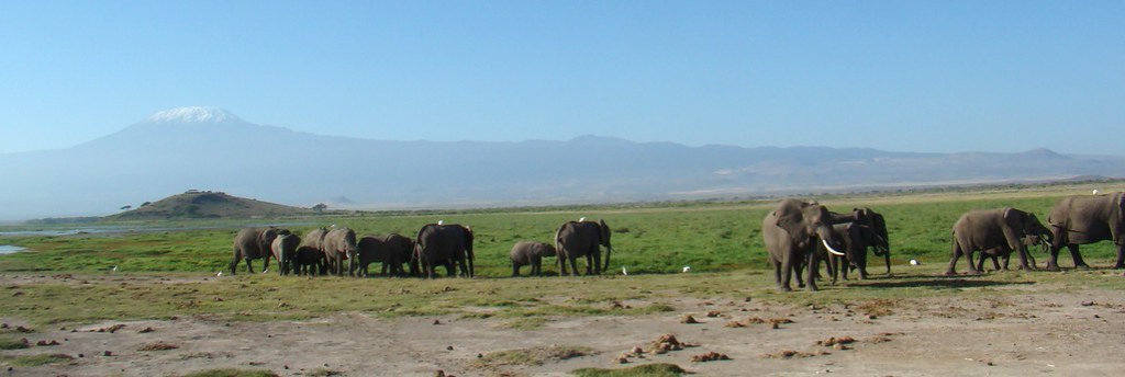 Elefantes Monte Kilimanjaro Parque Nacional Amboseli Kenia 09
