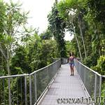 08 Viajefilos en Australia, Mamu Tropical Skywalk 001